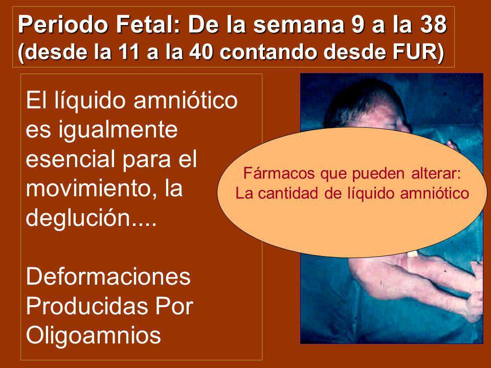 Periodo Fetal: De la semana 9 a la 38