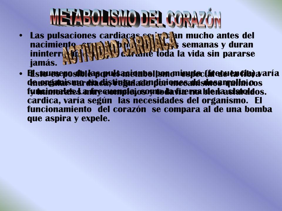 METABOLISMO DEL CORAZÓN