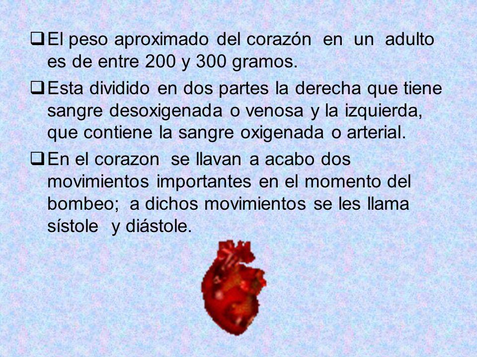 El peso aproximado del corazón en un adulto es de entre 200 y 300 gramos.