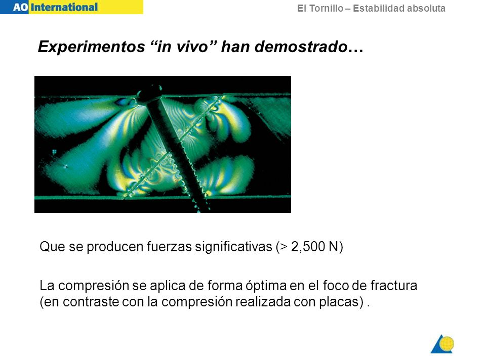 Experimentos in vivo han demostrado…