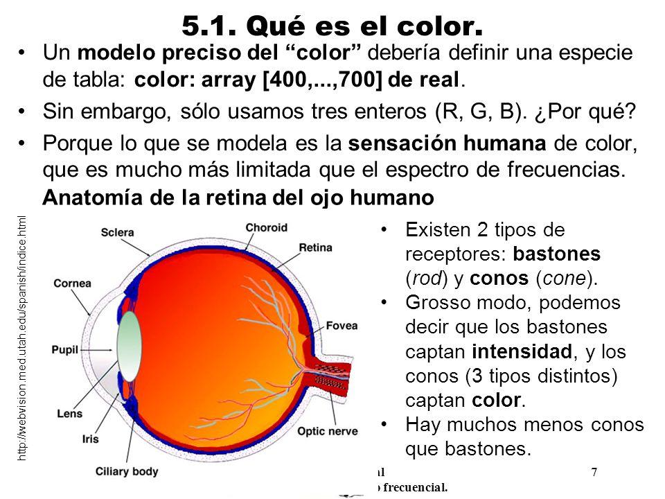 Anatomía de la retina del ojo humano