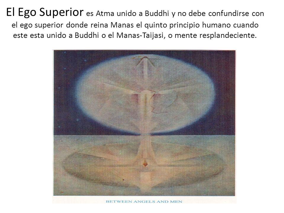 El Ego Superior es Atma unido a Buddhi y no debe confundirse con el ego superior donde reina Manas el quinto principio humano cuando este esta unido a Buddhi o el Manas-Taijasi, o mente resplandeciente.