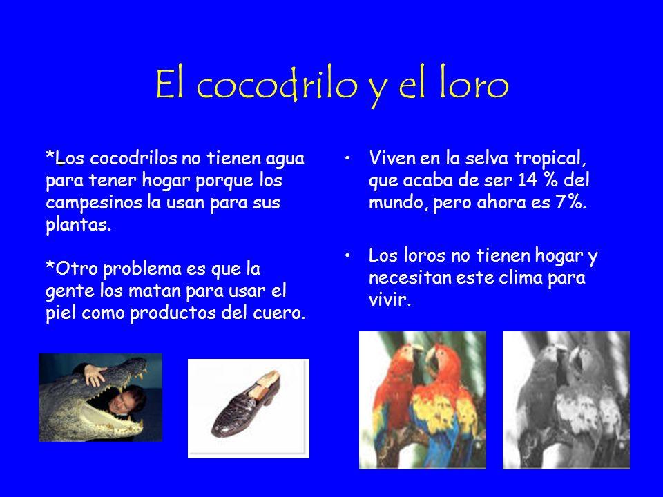 El cocodrilo y el loro *Los cocodrilos no tienen agua para tener hogar porque los campesinos la usan para sus plantas.