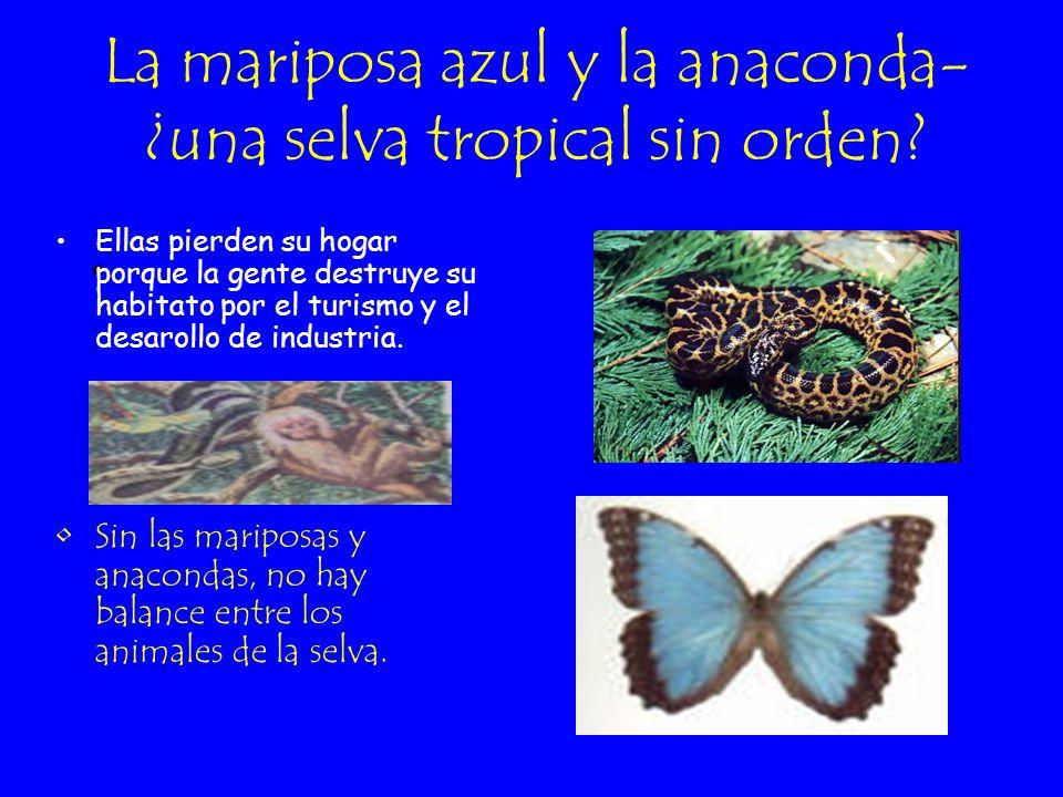 La mariposa azul y la anaconda- ¿una selva tropical sin orden