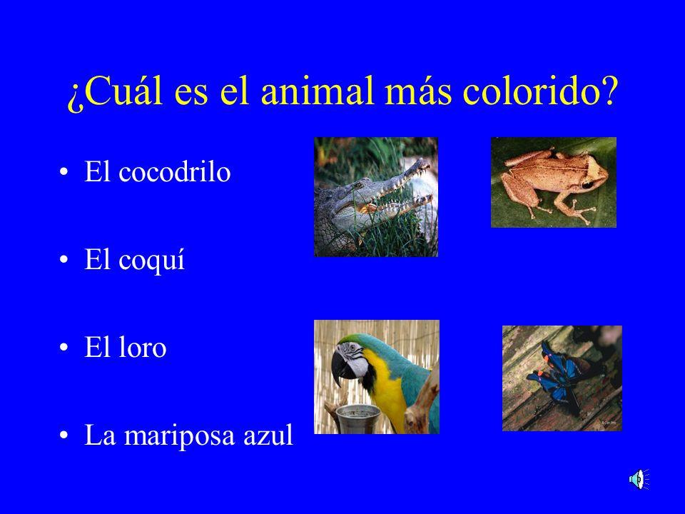 ¿Cuál es el animal más colorido