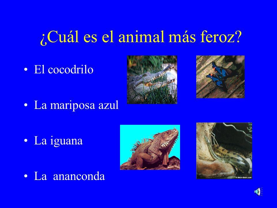 ¿Cuál es el animal más feroz