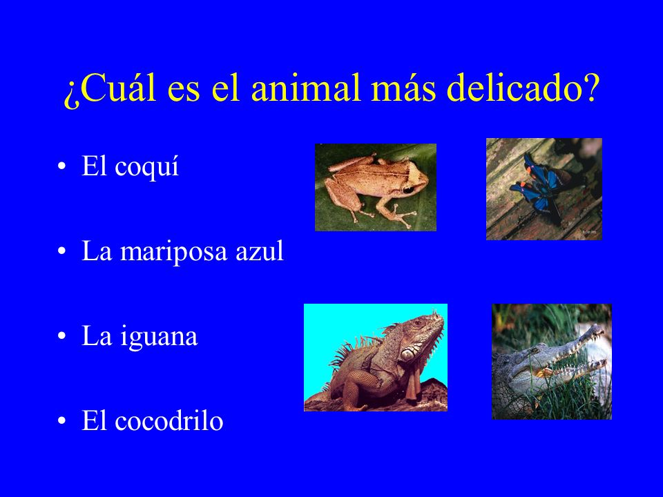 ¿Cuál es el animal más delicado