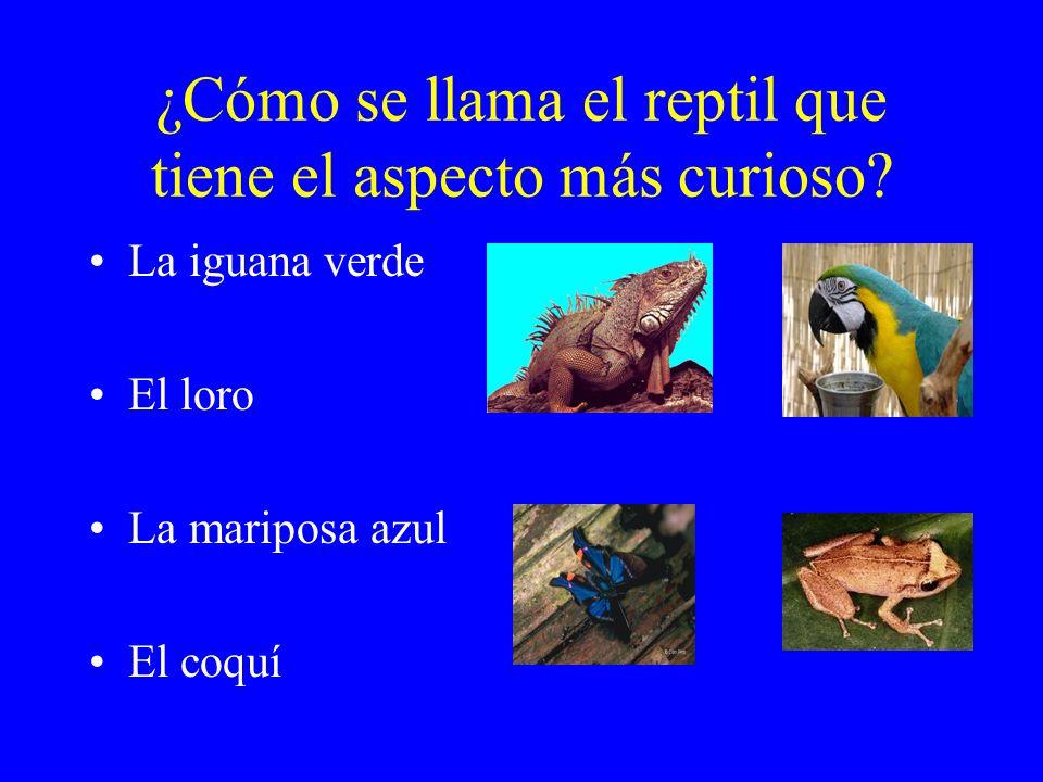 ¿Cómo se llama el reptil que tiene el aspecto más curioso