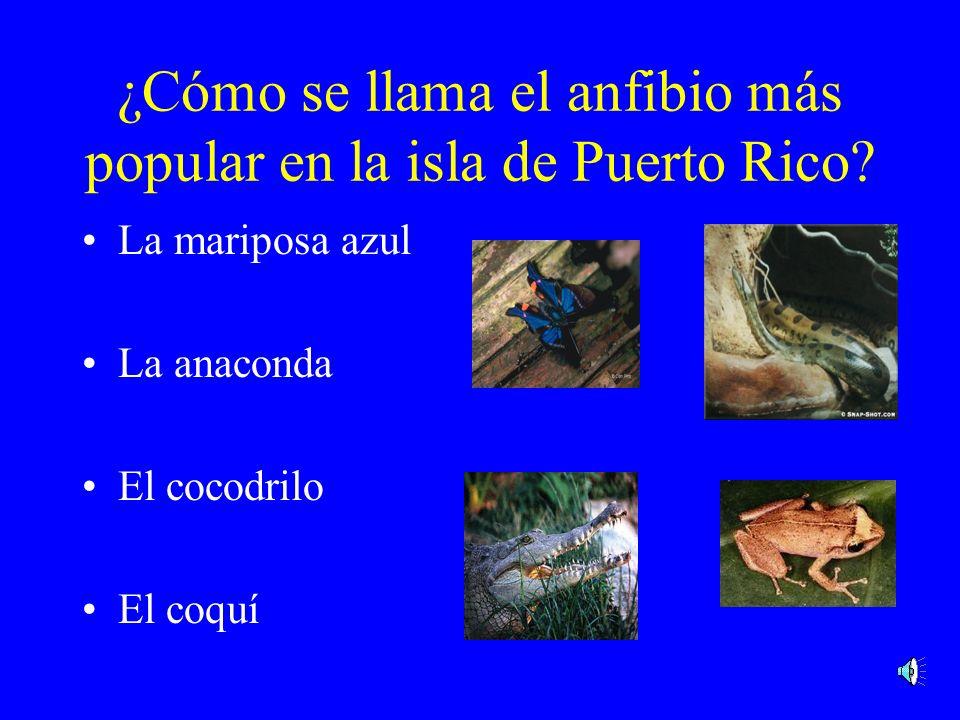 ¿Cómo se llama el anfibio más popular en la isla de Puerto Rico