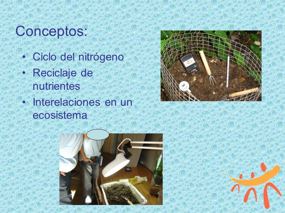 Conceptos: Ciclo del nitrógeno Reciclaje de nutrientes