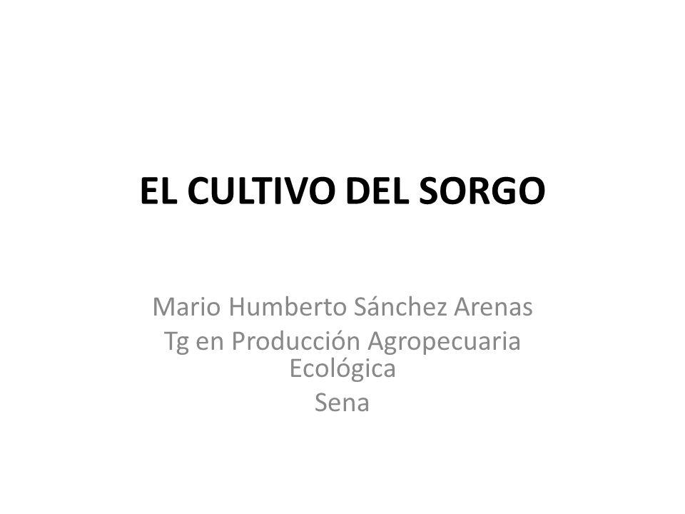 EL CULTIVO DEL SORGO Mario Humberto Sánchez Arenas