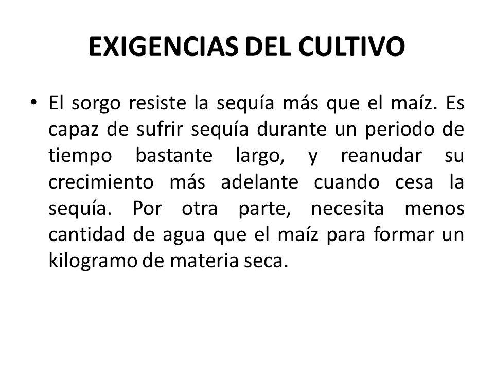 EXIGENCIAS DEL CULTIVO