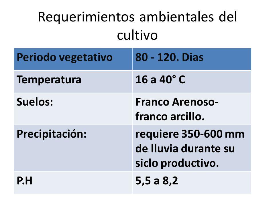 Requerimientos ambientales del cultivo
