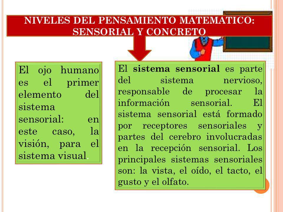 NIVELES DEL PENSAMIENTO MATEMATICO: SENSORIAL Y CONCRETO