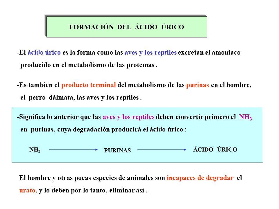 come abbassare l'acido urico nel sangue acido urico sangue alto como tratar a crise de gota