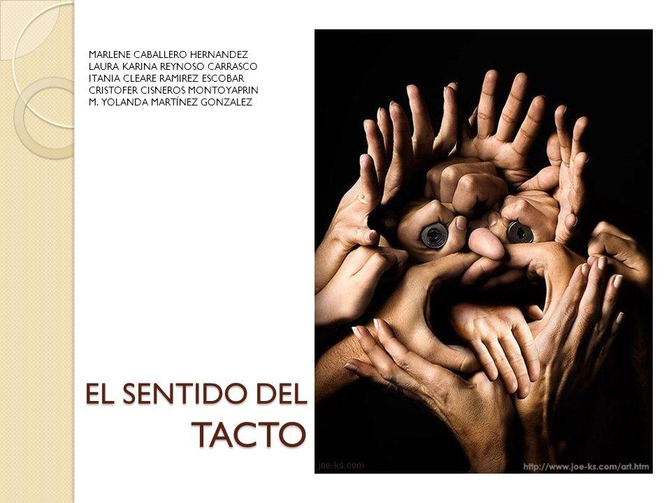 EL SENTIDO DEL TACTO MARLENE CABALLERO HERNANDEZ