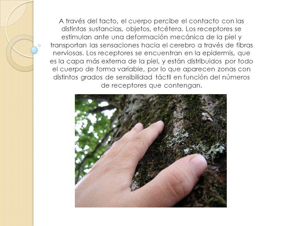 A través del tacto, el cuerpo percibe el contacto con las distintas sustancias, objetos, etcétera.