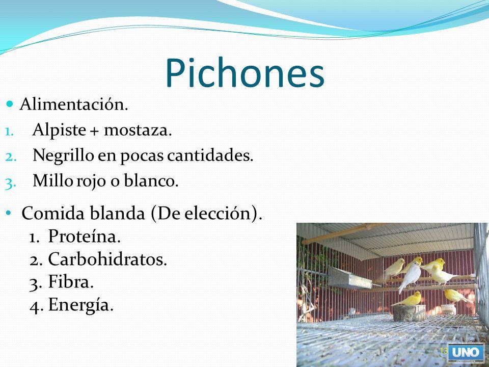 Pichones Comida blanda (De elección). Proteína. Carbohidratos. Fibra.