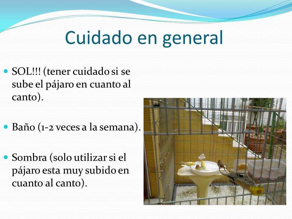 Cuidado en general SOL!!! (tener cuidado si se sube el pájaro en cuanto al canto). Baño (1-2 veces a la semana).