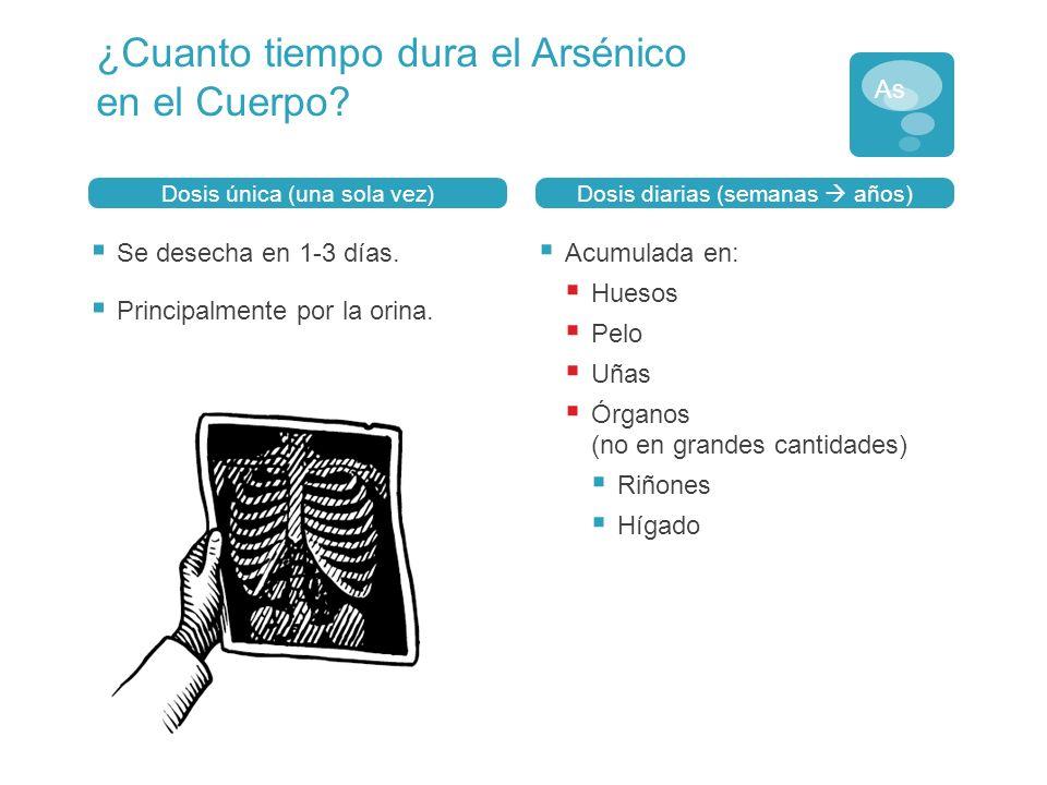 ¿Cuanto tiempo dura el Arsénico en el Cuerpo