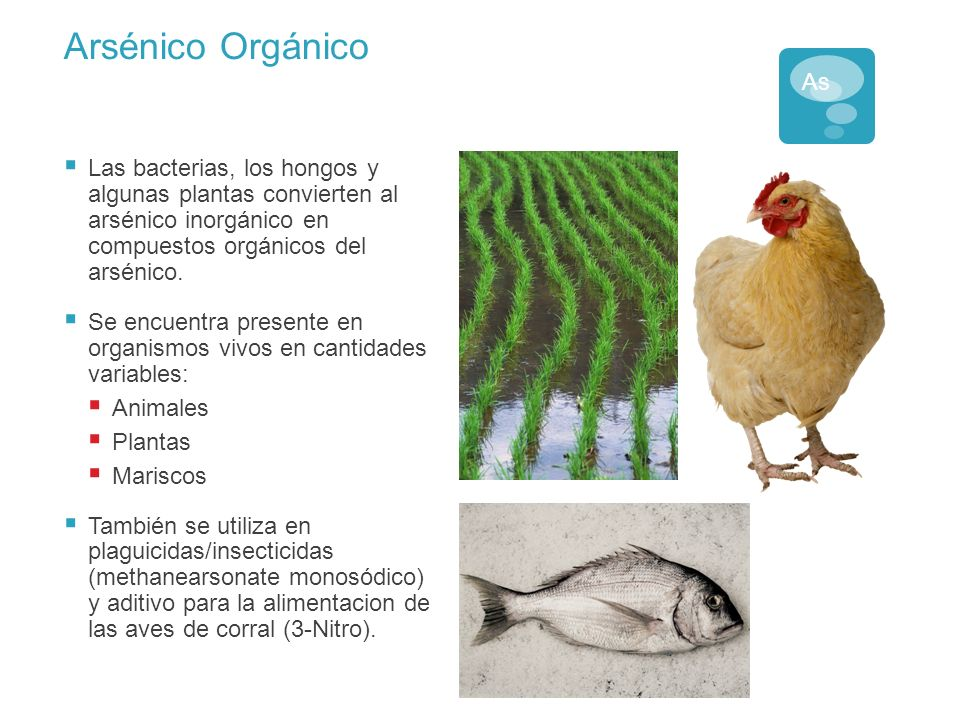 Arsénico Orgánico As. Las bacterias, los hongos y algunas plantas convierten al arsénico inorgánico en compuestos orgánicos del arsénico.