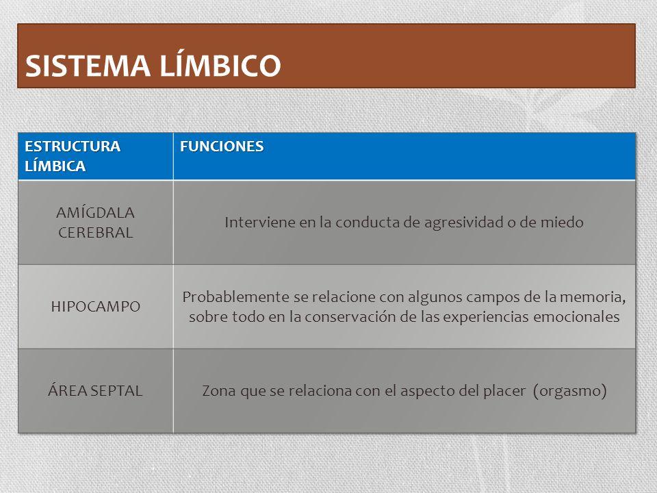 SISTEMA LÍMBICO ESTRUCTURA LÍMBICA FUNCIONES AMÍGDALA CEREBRAL