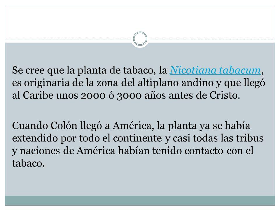 Se cree que la planta de tabaco, la Nicotiana tabacum, es originaria de la zona del altiplano andino y que llegó al Caribe unos 2000 ó 3000 años antes de Cristo.