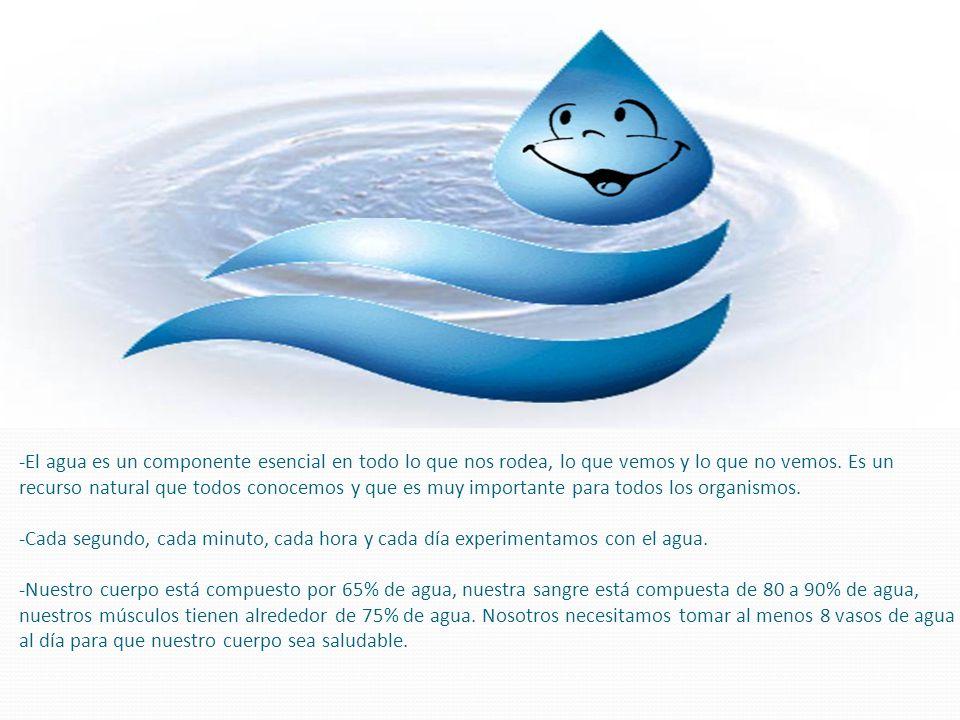 -El agua es un componente esencial en todo lo que nos rodea, lo que vemos y lo que no vemos. Es un recurso natural que todos conocemos y que es muy importante para todos los organismos. -Cada segundo, cada minuto, cada hora y cada día experimentamos con el agua. -Nuestro cuerpo está compuesto por 65% de agua, nuestra sangre está compuesta de 80 a 90% de agua, nuestros músculos tienen alrededor de 75% de agua. Nosotros necesitamos tomar al menos 8 vasos de agua al día para que nuestro cuerpo sea saludable.