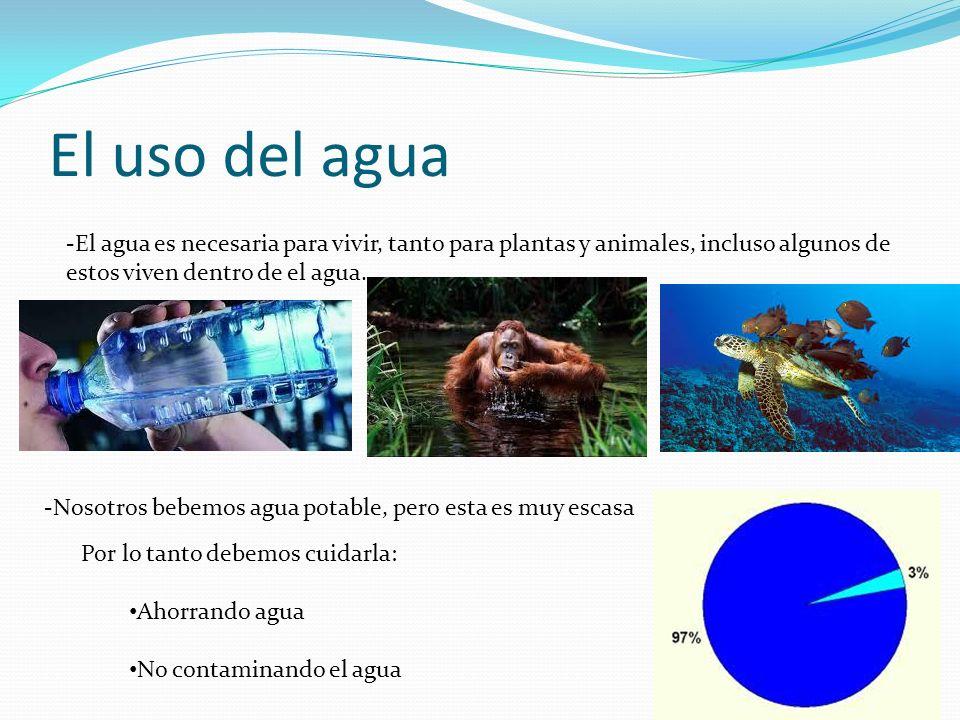 El uso del agua -El agua es necesaria para vivir, tanto para plantas y animales, incluso algunos de estos viven dentro de el agua.