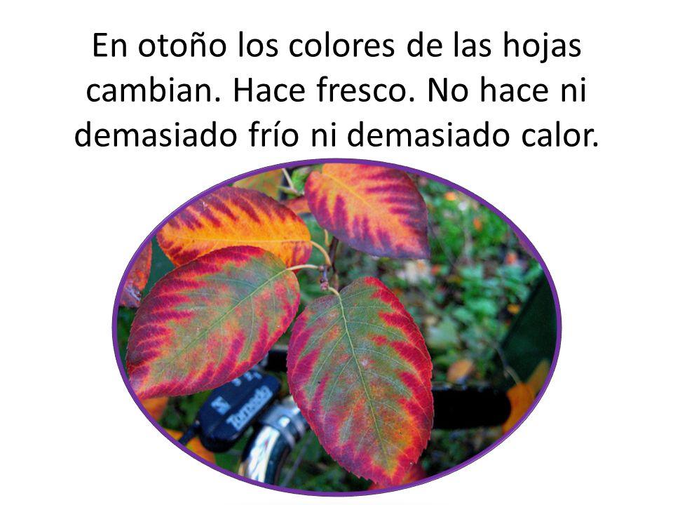 En otoño los colores de las hojas cambian. Hace fresco