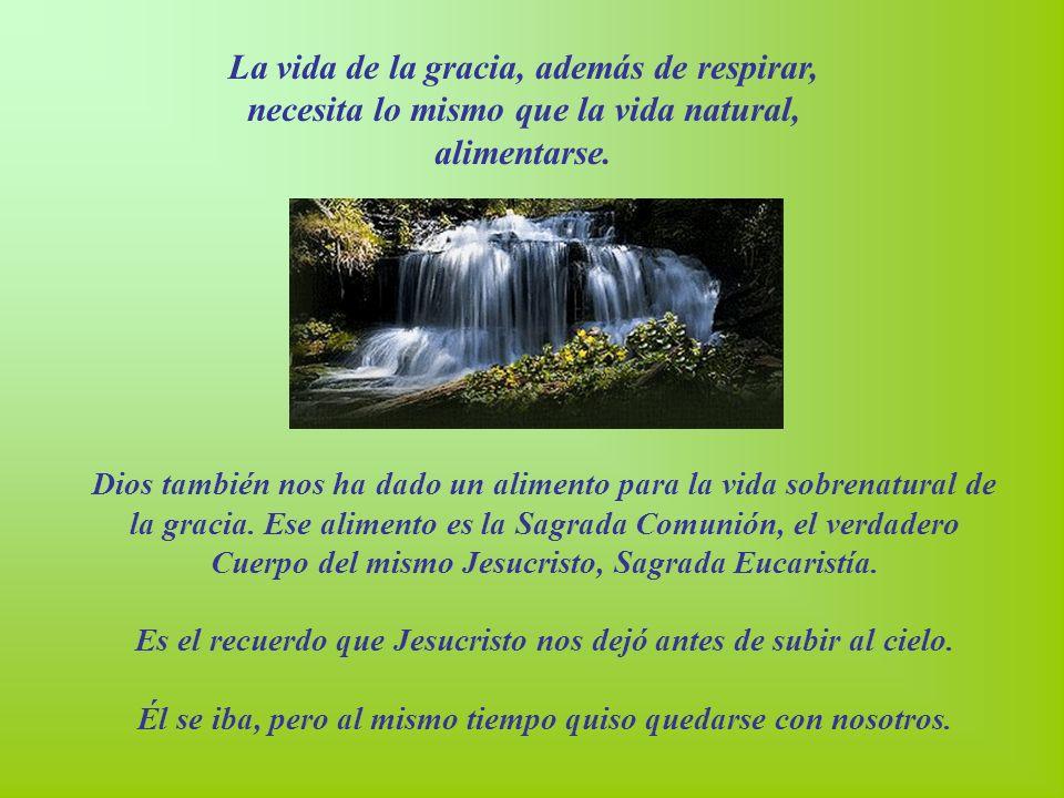 La vida de la gracia, además de respirar, necesita lo mismo que la vida natural, alimentarse.