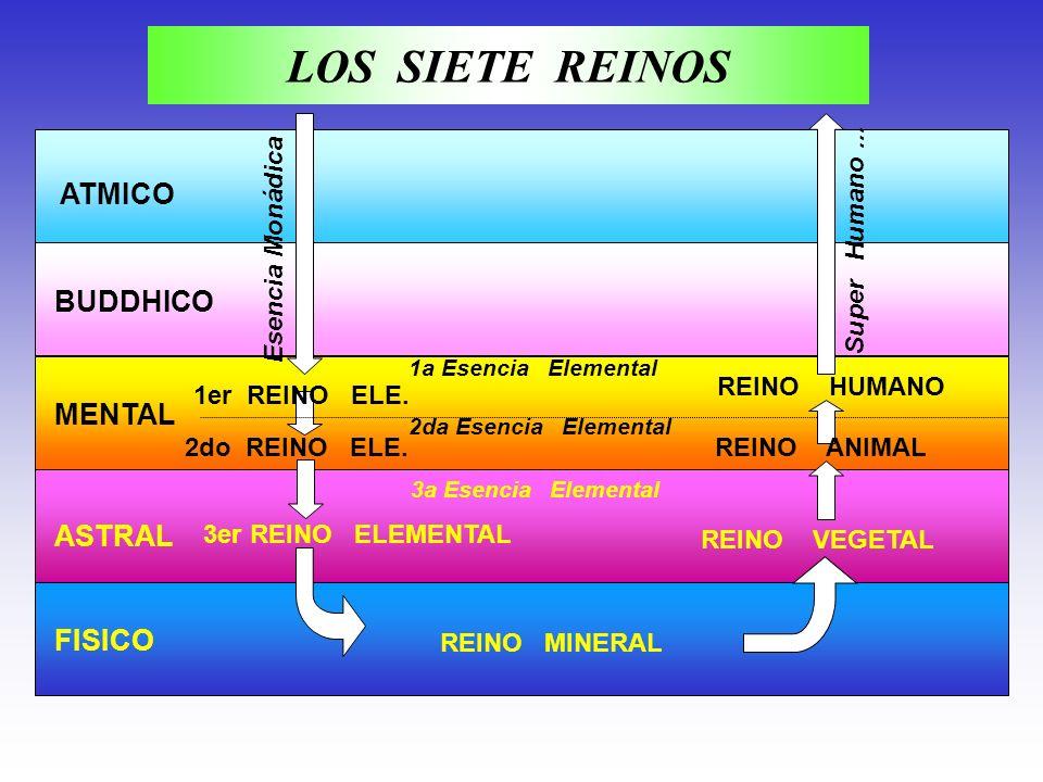 LOS SIETE REINOS ATMICO BUDDHICO MENTAL ASTRAL FISICO Super Humano ...