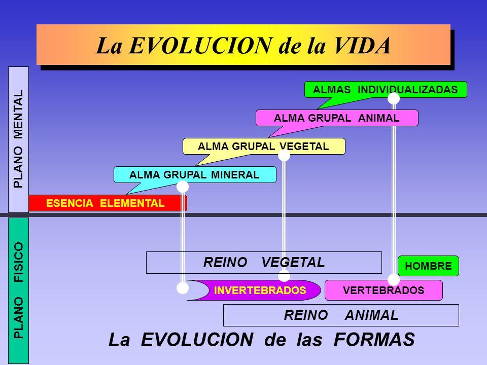ALMAS INDIVIDUALIZADAS La EVOLUCION de las FORMAS