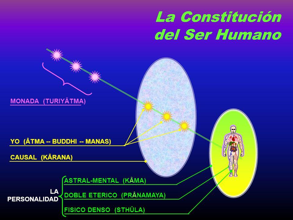 La Constitución del Ser Humano