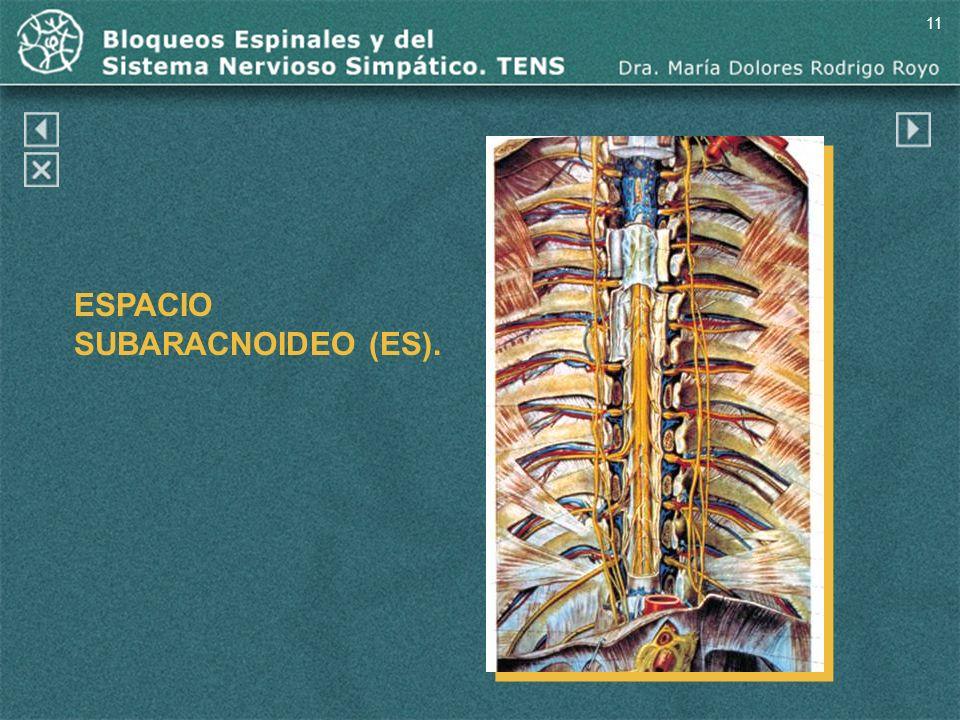ESPACIO SUBARACNOIDEO (ES).