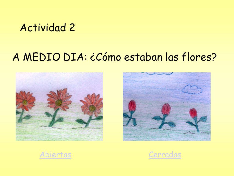 A MEDIO DIA: ¿Cómo estaban las flores
