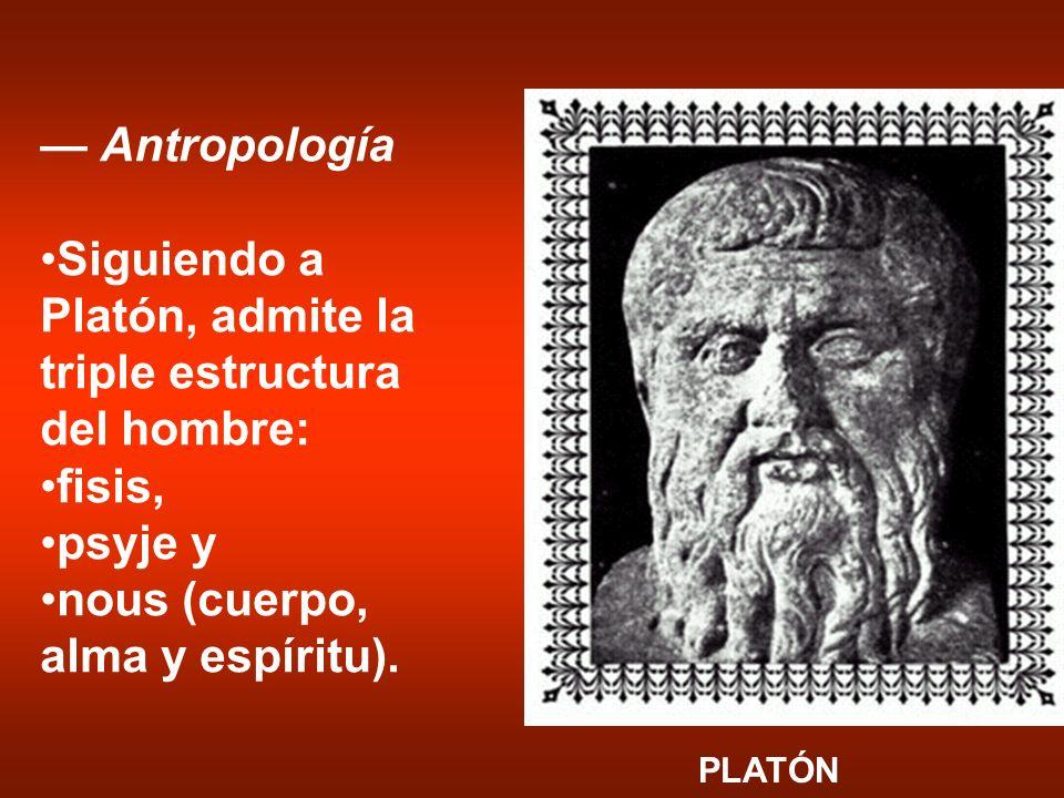 Siguiendo a Platón, admite la triple estructura del hombre: