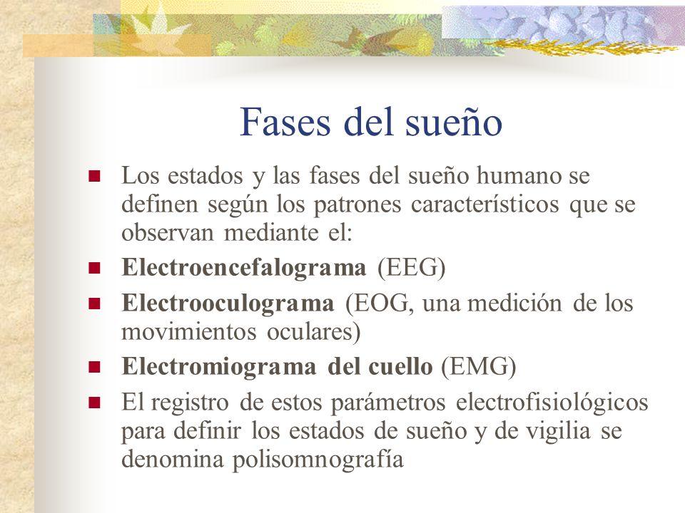 Fases del sueño Los estados y las fases del sueño humano se definen según los patrones característicos que se observan mediante el: