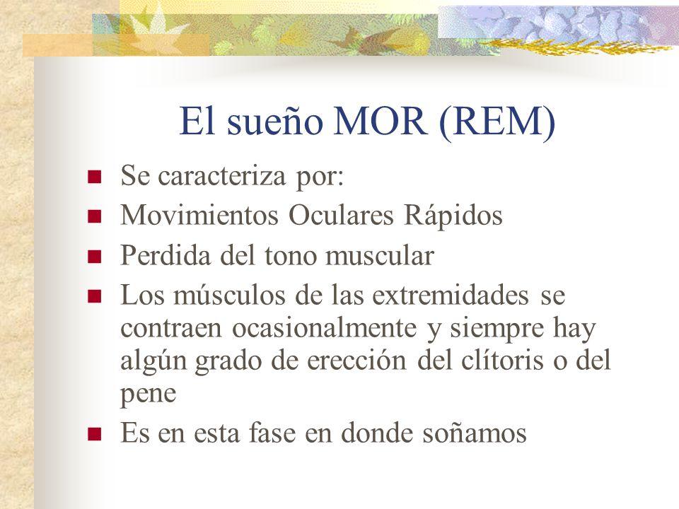 El sueño MOR (REM) Se caracteriza por: Movimientos Oculares Rápidos