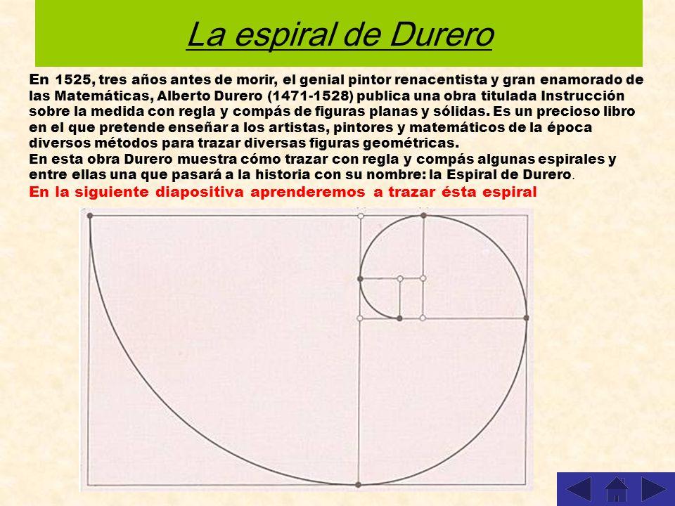 La espiral de Durero