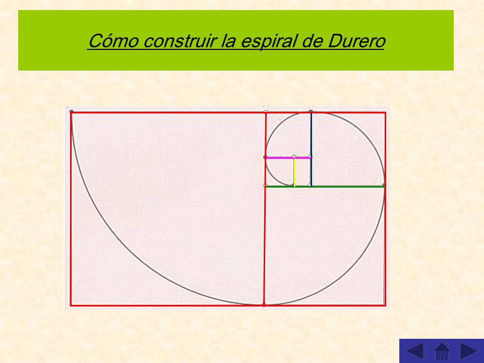 Cómo construir la espiral de Durero