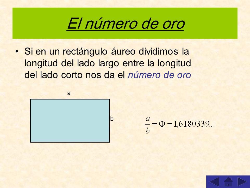 El número de oro Si en un rectángulo áureo dividimos la longitud del lado largo entre la longitud del lado corto nos da el número de oro.