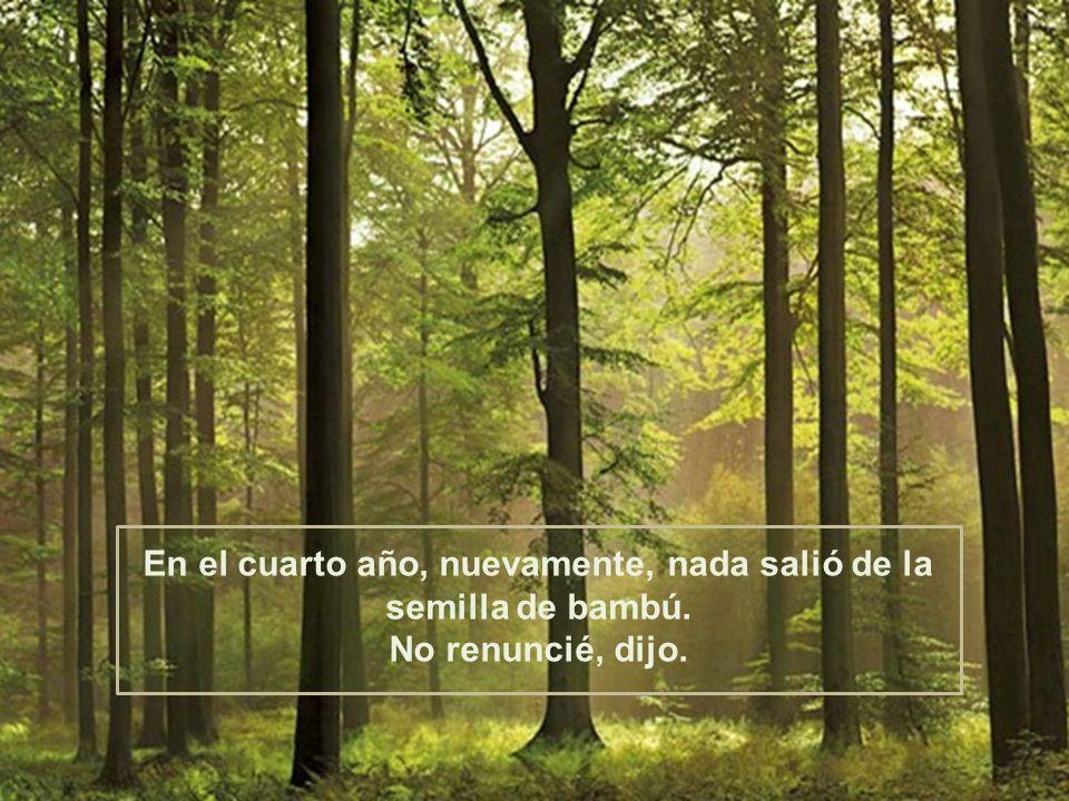 En el cuarto año, nuevamente, nada salió de la semilla de bambú