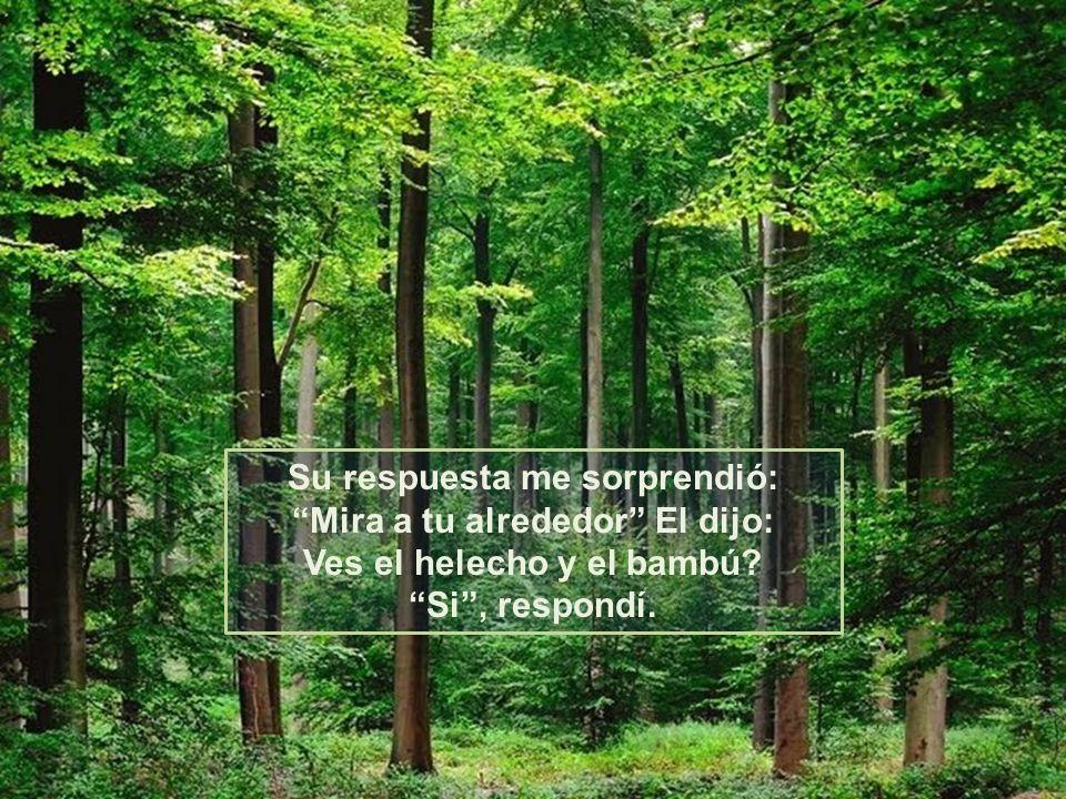 Su respuesta me sorprendió: Mira a tu alrededor El dijo: Ves el helecho y el bambú.
