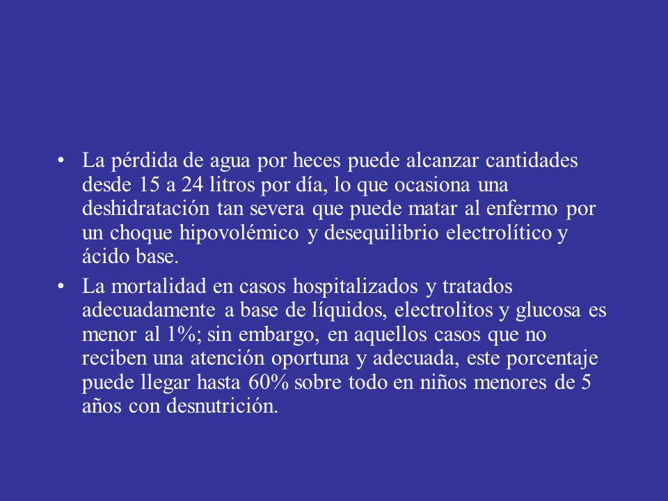 La pérdida de agua por heces puede alcanzar cantidades desde 15 a 24 litros por día, lo que ocasiona una deshidratación tan severa que puede matar al enfermo por un choque hipovolémico y desequilibrio electrolítico y ácido base.