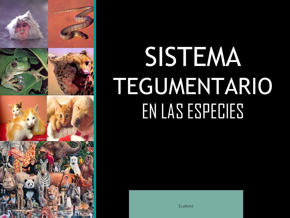 SISTEMA TEGUMENTARIO EN LAS ESPECIES