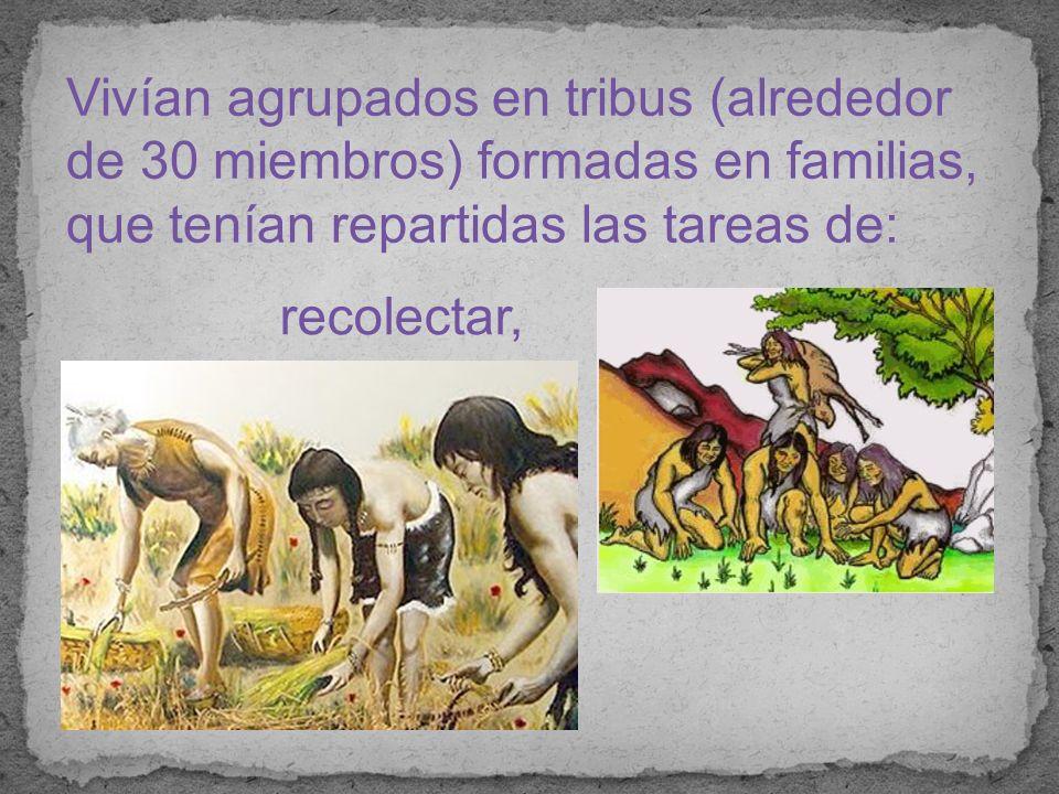 Vivían agrupados en tribus (alrededor de 30 miembros) formadas en familias, que tenían repartidas las tareas de: