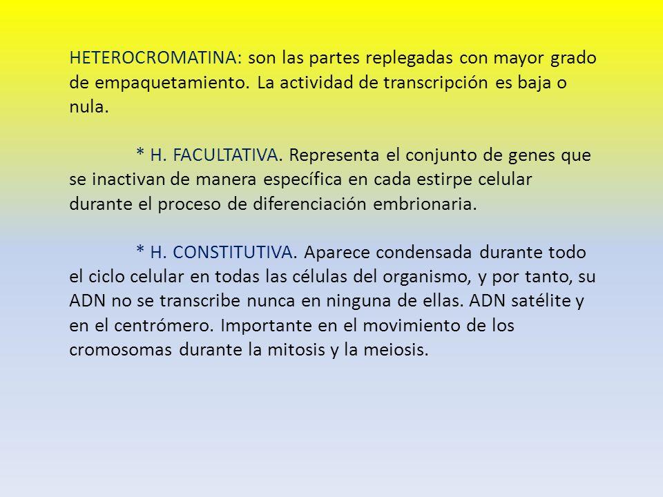 HETEROCROMATINA: son las partes replegadas con mayor grado de empaquetamiento. La actividad de transcripción es baja o nula.