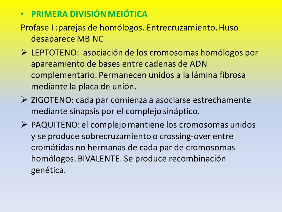 PRIMERA DIVISIÓN MEIÓTICA