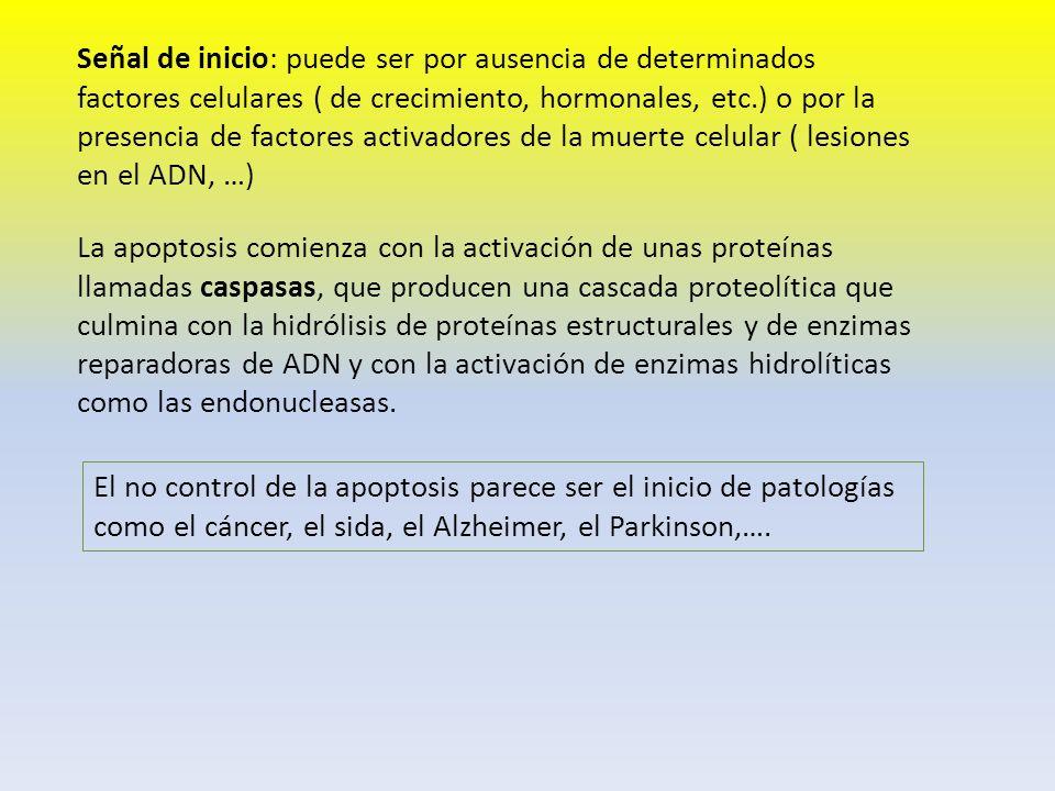 Señal de inicio: puede ser por ausencia de determinados factores celulares ( de crecimiento, hormonales, etc.) o por la presencia de factores activadores de la muerte celular ( lesiones en el ADN, …)
